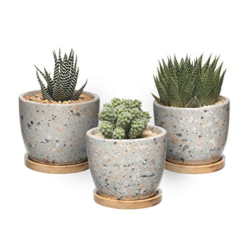 T4U Maceta de Cactus Suculenta de Cemento, Jardinera de Hormigón Maceta Contenedor...