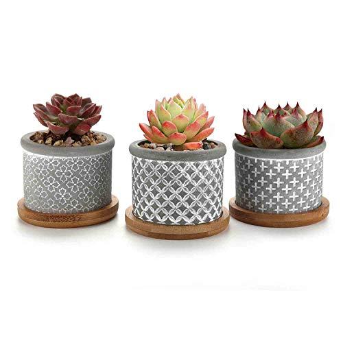T4U 6CM Macetas para Cactus de Cemento con Plato de Paquete de 3, Mini Maceteros...