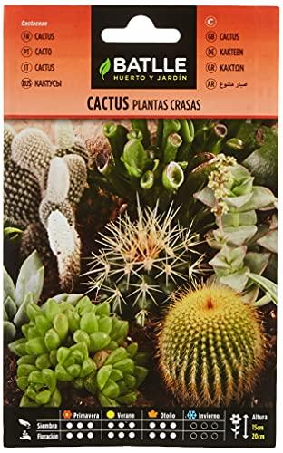 Semillas de Flores - Cactus Plantas Crasas variadas - Batlle