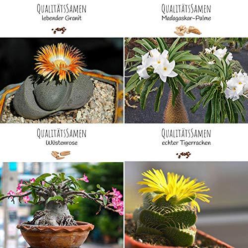 Exóticas semillas de cactus con alta tasa de germinación - Set de semillas...