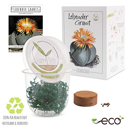 GROW2GO Cactus Starter Kit - Juego de plantación de mini-invernadero, semillas de...
