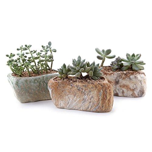 T4U Conjunto de 3 Forma de Piedra distintiva Cerámicos Planta Maceta Suculento...