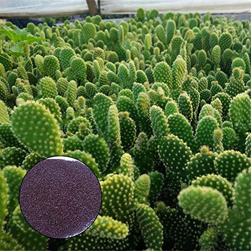 KINGDUO Egrow 100Pcs/Bolso Opuntia Microdasys Seeds Bonsai Plantas Suculentas Green...