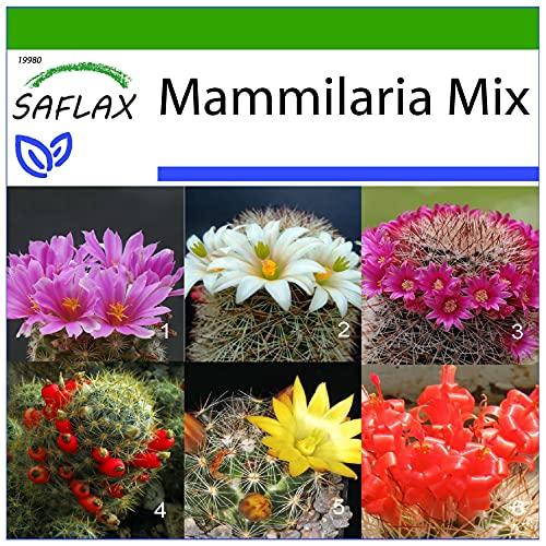 SAFLAX - Mezcla mammillaria - 40 semillas - Con sustrato estéril para cultivo -...