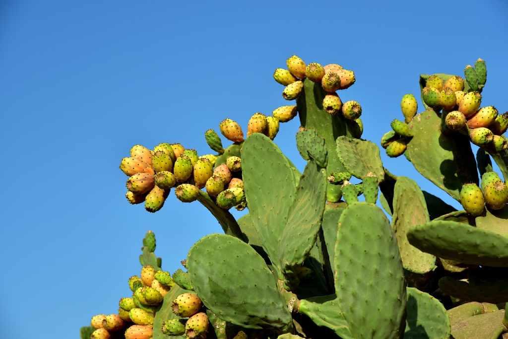 plantas crasas y cactus