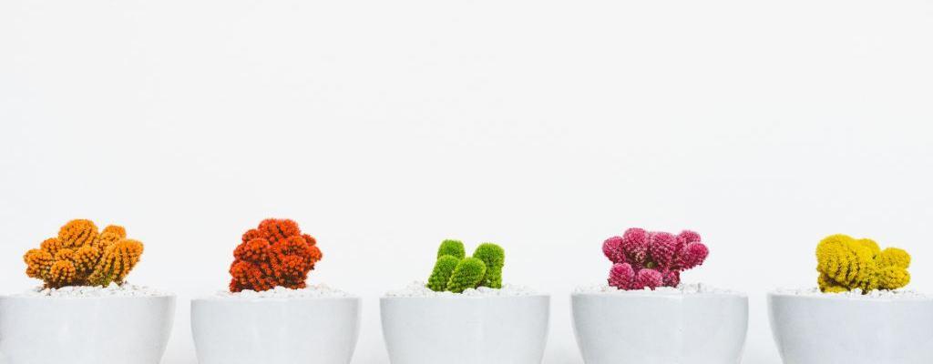 cactus el fen sui