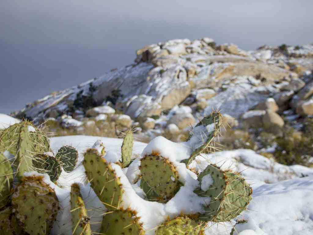 cactus que aguantan heladas