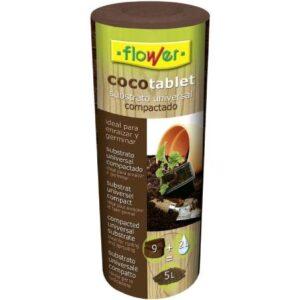 germinar en fibra de coco