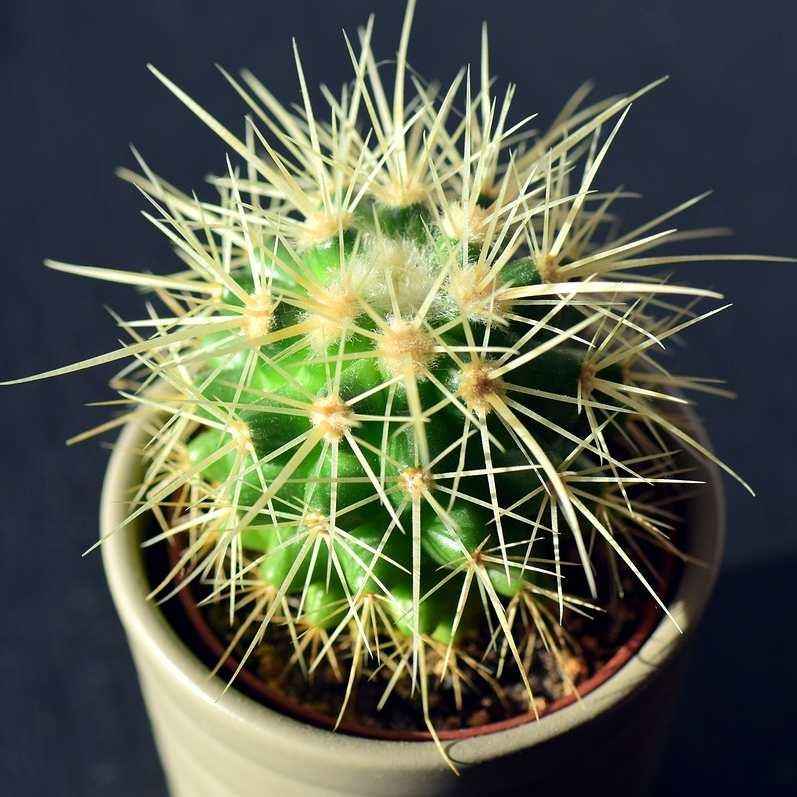 pincharse los dedos con un cactus