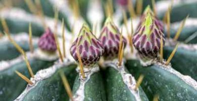 cactus con pinchos