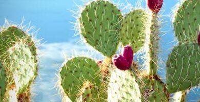 tienda online de cactus