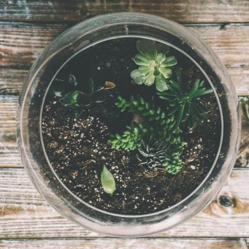 jardin de crasas y suculentas