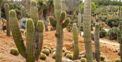 comprar sustrato para cactus
