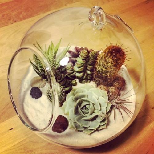 mini jardin de crasas y suculentas