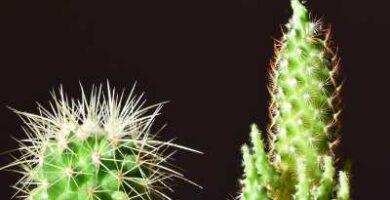 sustrato para cactus