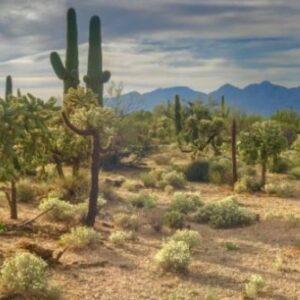 imagenes de cactus en el desierto