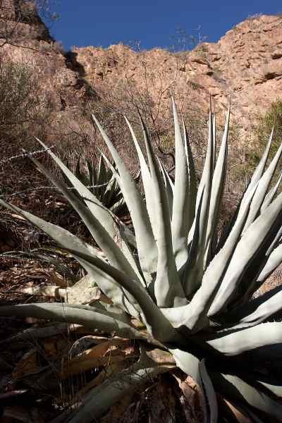 desierto de chihuahua flora y fauna