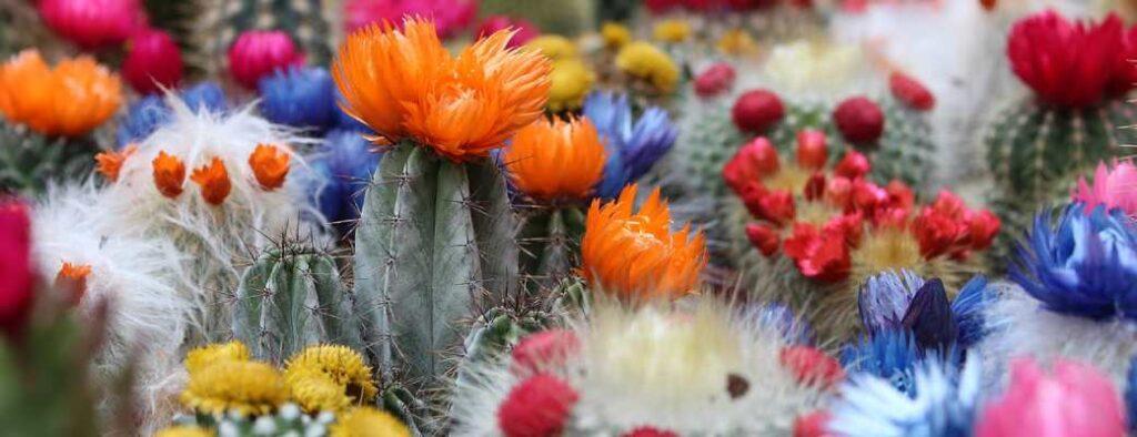 cactos con flor