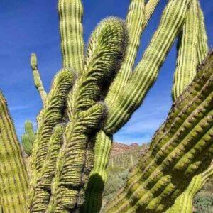 cactus grandes interior