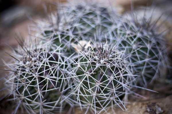 espinas de cactus en la piel