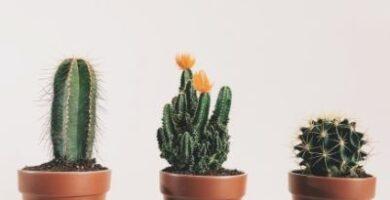 mini cactus ikea