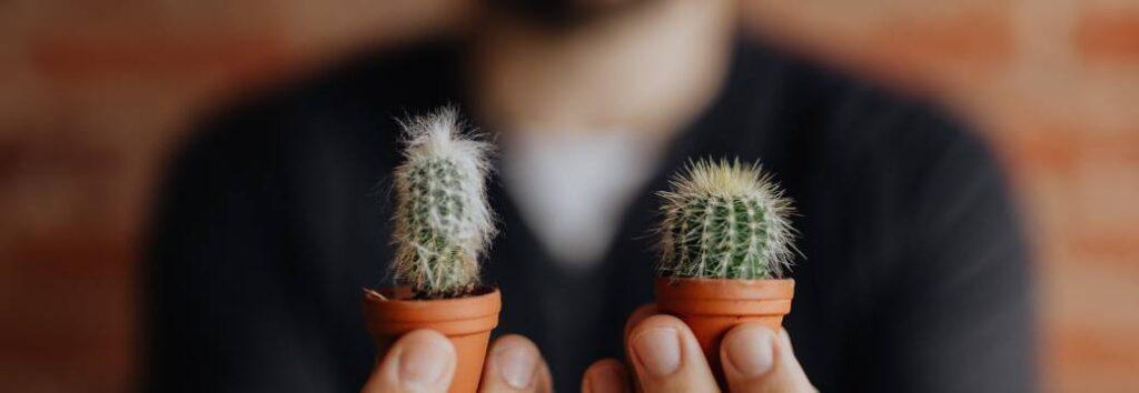 mini cactus baratos