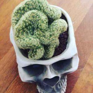 cactus con forma de cerebro